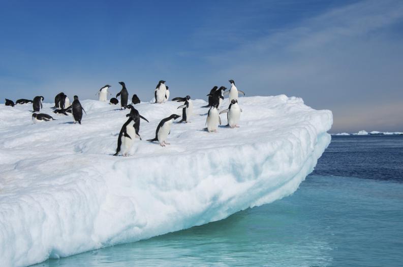7-animales-que-solo-podrias-ver-en-la-Antartida